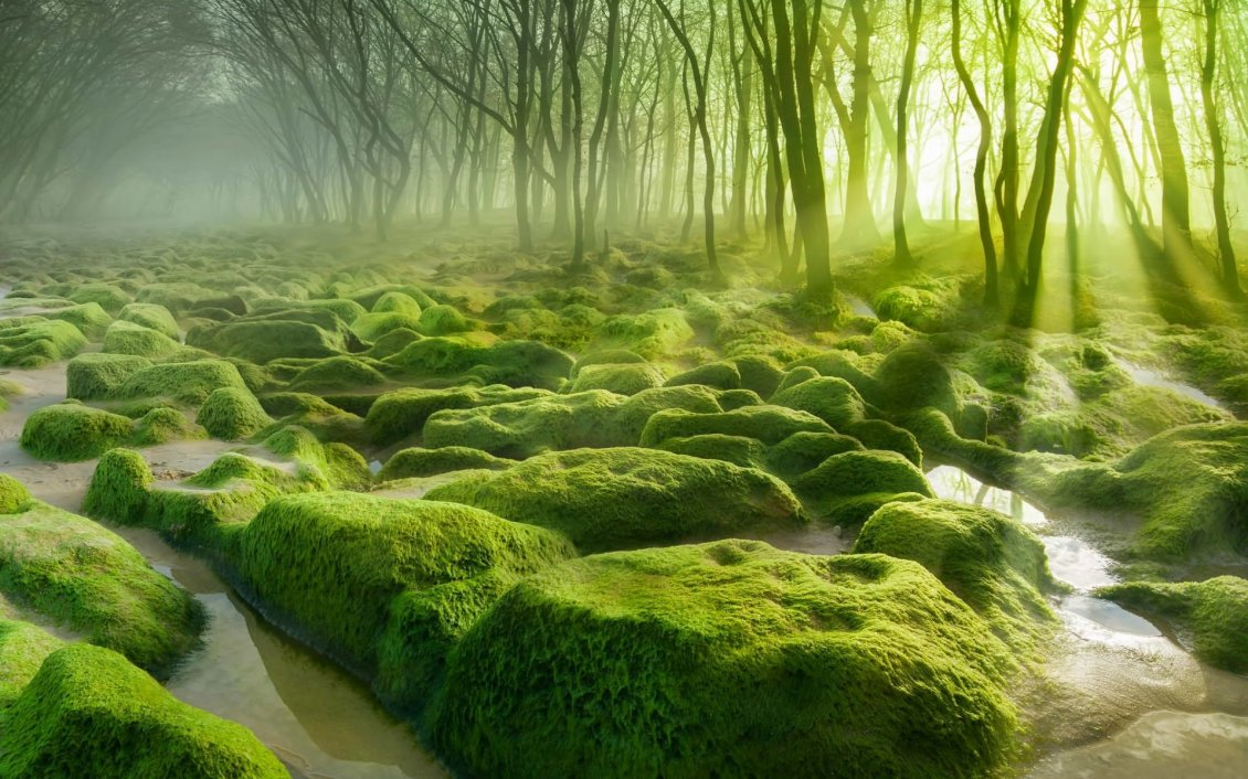 8993_Green-moss-in-the-forest-and-the-sunlight-between-branches